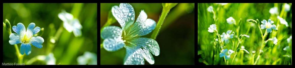 0001-fiori - Fiori delle Alpi Liguri