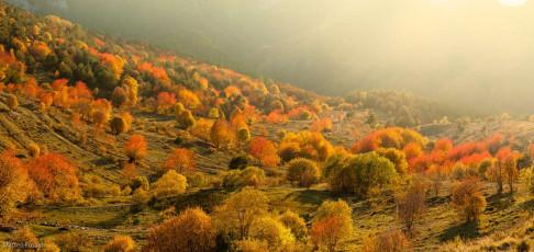 AL242 - Foliage in Alta Val Tanaro