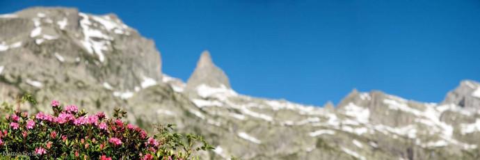 LP048 - Rododendri e Rocca della Bastera