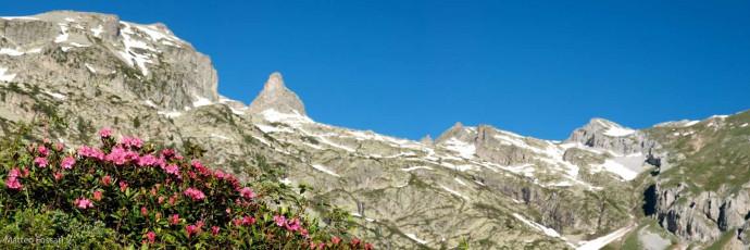 LP049 - Rododendri e Rocca della Bastera