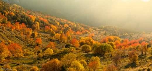 Foliage in Alta Val Tanaro
